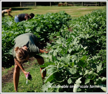 sustainable small-scale farming